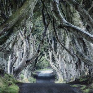 Dark Hedges Northern Ireland Kuzey İrlanda Büyük Ebatlarda