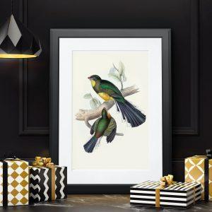 Rangarenk Cıvıl Cıvıl Kuş Çizimleri