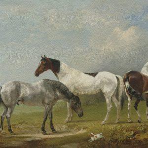 Edmund Bristow Two Skewbalds, a grey and spaniel  Yağlı Boya Eseri Oil Paint Efekti